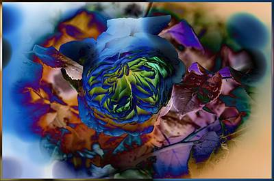 The Blue English Rose Print by Thom Zehrfeld