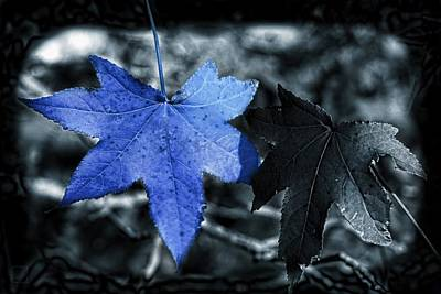 Mystic Photograph - The Blue Leaf  by Daniel  Arrhakis
