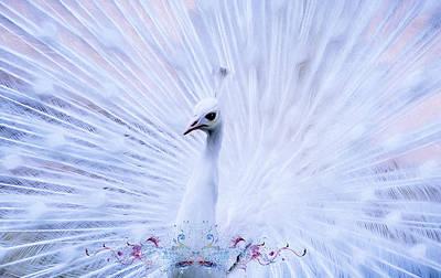 Pheasant Mixed Media - The Blue Prince by Georgiana Romanovna