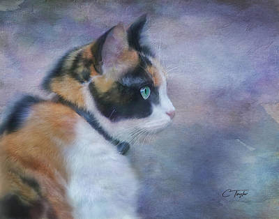Black Background Mixed Media - The Calico Staredown  by Colleen Taylor