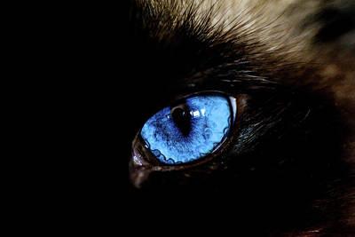 Kitten Digital Art - The Cat Eye by Toppart Sweden