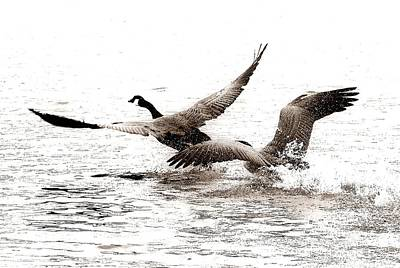 Geese Digital Art - The Chase  by Angie Tirado