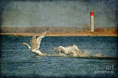 Swan Digital Art - The Chase Is On by Lois Bryan