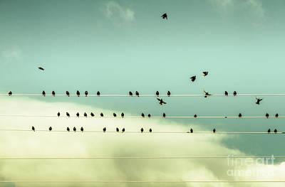 Music Recital Photograph - The Chorus Of Birds by Jorgo Photography - Wall Art Gallery
