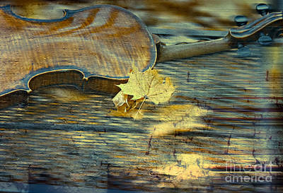 The Colors Of Autumn Print by Steven  Digman