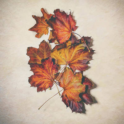 The Colors Of Fall Print by Scott Norris