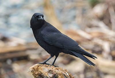 The Crow Print by Loree Johnson