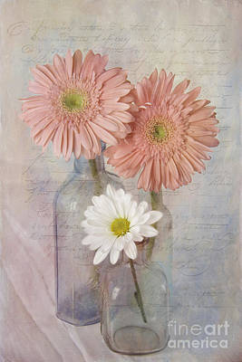 The Daisies Print by Cindi Ressler