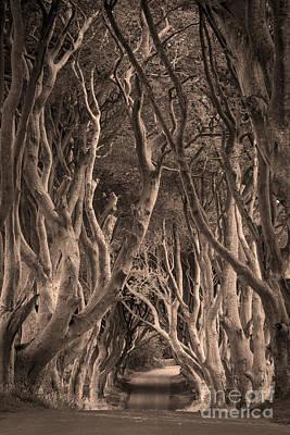 The Dark Hedges - Sepia Print by Brian Jannsen