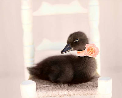 Duckling Photograph - The Debutante by Amy Tyler