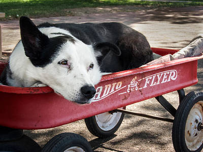 The Dog And The Radio Flyer Print by Mary Lee Dereske