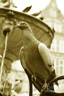 Danzig Photograph - The Dove by Stefan Kuhn