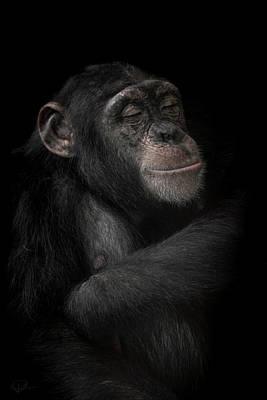 Chimpanzee Photograph - The Dream Catcher by Paul Neville
