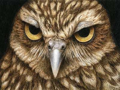 Raptor Painting - The Dubious Owl by Pat Erickson