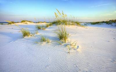 The Dunes Of Shell Island Print by JC Findley