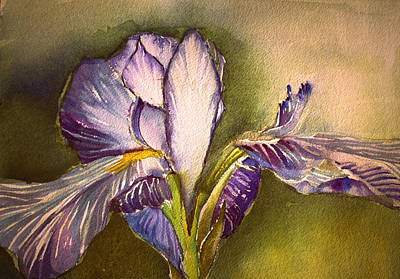 Irises Drawing - The Elegant Iris by Mindy Newman