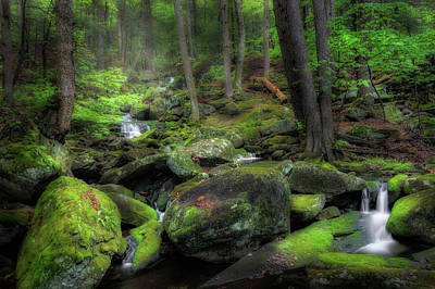 Serene Photograph - The Enchanted Forest by Bill Wakeley