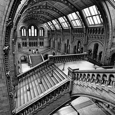 Natural History Photograph - The Escher View by Martin Williams