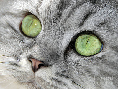 Prints Cat Photograph - The Eyes Have It by Graham Taylor