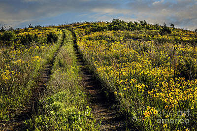 Photograph - The Farmer's Road by Tamyra Ayles