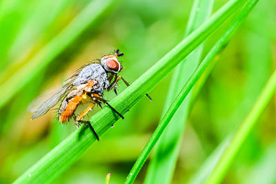 Wet Fly Digital Art - The Fly by Toppart Sweden