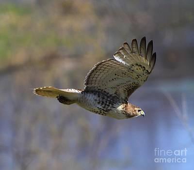 Turkey Mixed Media - The Flying Hawk by Robert Pearson