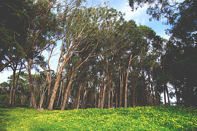 Eucalyptus Tree Photograph - The Forest Awaits by Laurie Search