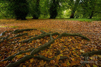 The Forest Floor Print by Stephen Smith