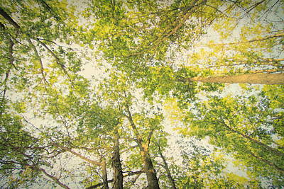 The Forest From Below Print by Dan Sproul