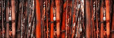 Empress Photograph - The Forest Of Bamboo  by Daniel Arrhakis