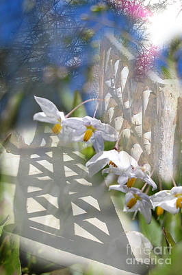 Fading Dream Photograph - The Gate To... by Rozalia Toth