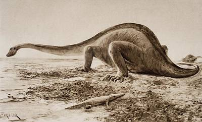 Crocodile Drawing - The Giganotosaurus, Disinterred From by Vintage Design Pics