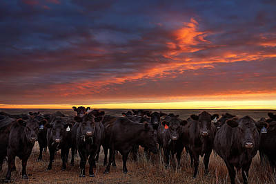 Great Plains Photograph - The Girls by Thomas Zimmerman