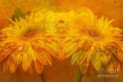 Gerbera Daisy Photograph - The Gold Mirror by Clare Bevan