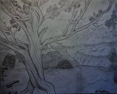 Grand Canyon Drawing - The Grand Canyon by Virginia Young