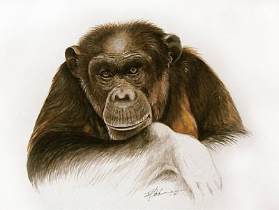 Chimpanzee Mixed Media - The Grand Old Lady by Dag Peterson