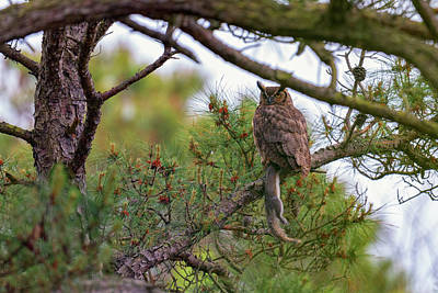 Talons Photograph - The Great Horned Owl And His Prey by Rick Berk