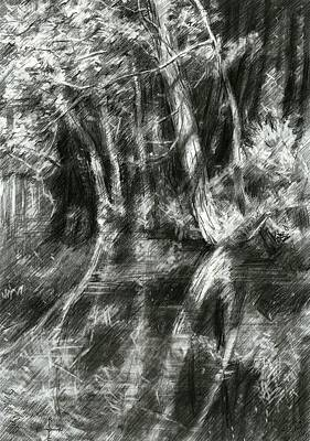 Nederland Drawing - The Hague Forrest - 23-06-15 by Corne Akkers