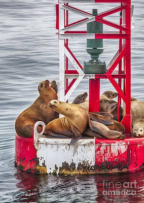 Animals Photograph - The Hangout by David Millenheft