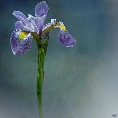 The Harlem Meer Iris Print by Chris Lord