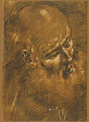 Drawing - The Head Of An Old Man Probably Saint Joseph by Giacomo Cavedone