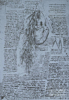 Pen And Ink Drawing Drawing - The Heart And The Bronchial Arteries by Leonardo Da Vinci