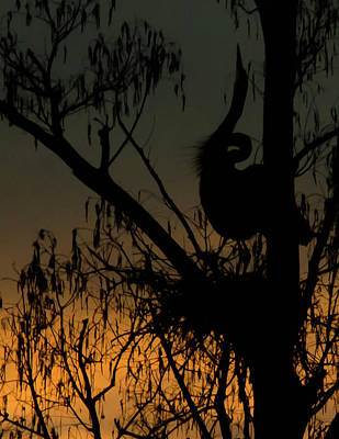 The Heron Neck Stretch Print by Dot Rambin