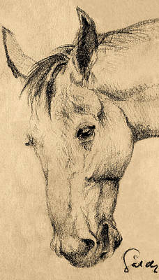 Friendly Drawing - The Horse Portrait by Odon Czintos