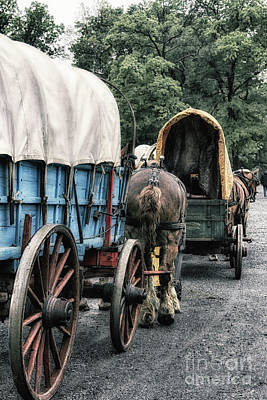 Primitive Photograph - The Horse Train  by Steven Digman