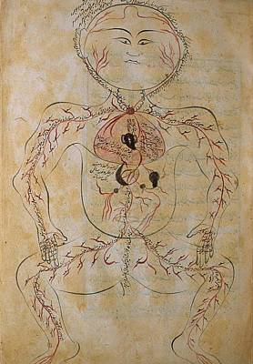 The Human Circulation System Print by Everett