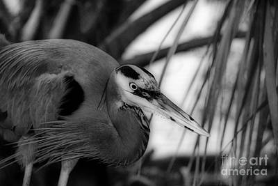 Of Birds Photograph - The Hunter by Skip Willits