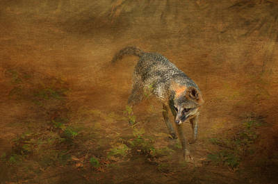Texture Photograph - The Huntress by Carla Parris