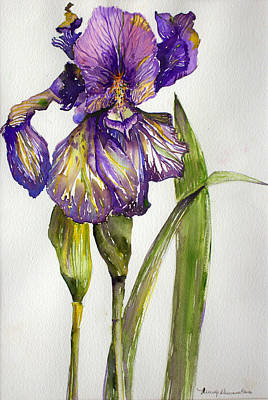 Irises Drawing - The Iris by Mindy Newman