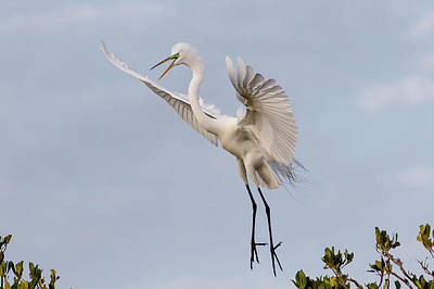 Bird Photograph - The Last Egret Standing by Phil Stone